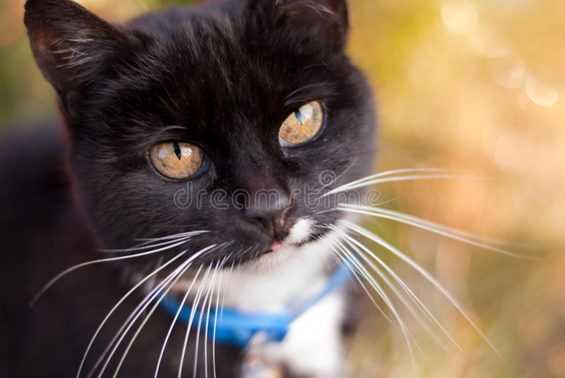 黑白家猫在庭院里 免版税库存图片