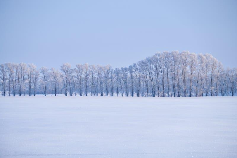 白扬树森林传送带在树冰下的在胜利的雪原 免版税库存照片