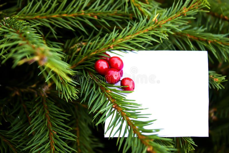 白方块贺卡为圣诞节假日 云杉的分支、锥体和红色莓果 文本的空间 库存照片