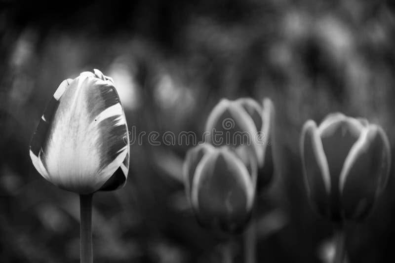 黑白春天 图库摄影
