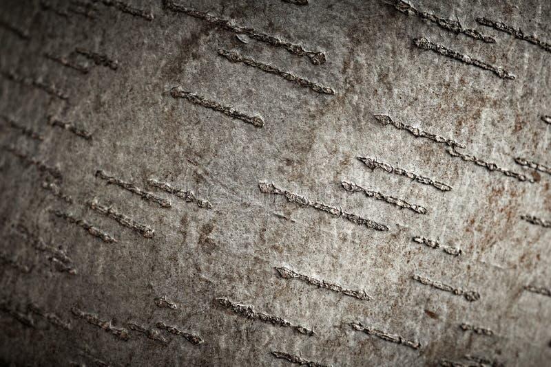 白杨木吠声纹理结构树 免版税库存照片