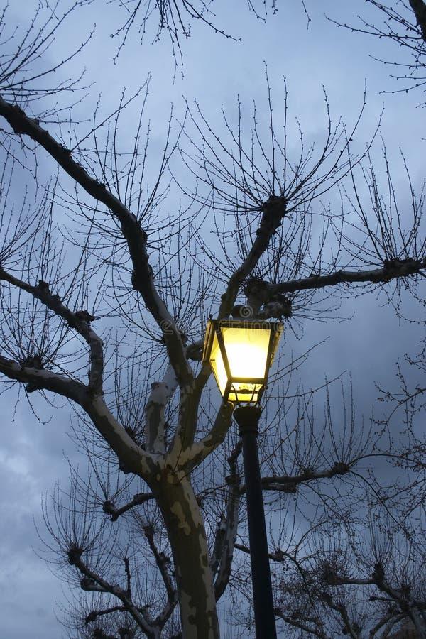 白杨木黄昏闪亮指示街道 库存照片
