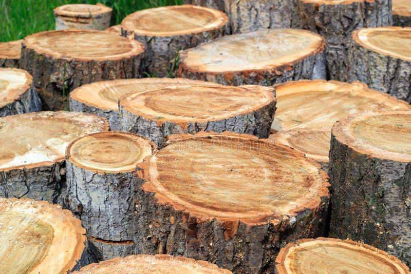 白杨树切口和裁减成片断,是必要的 免版税库存照片