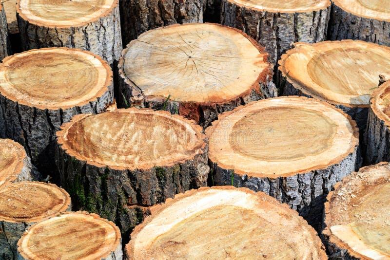 白杨树木头为木柴切开许多树桩在一个地方 免版税库存照片