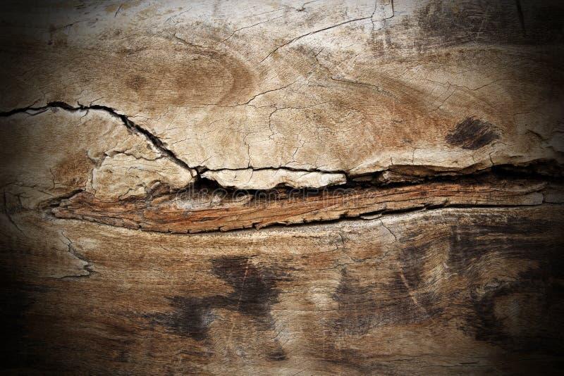 白杨树木破裂的纹理 库存图片