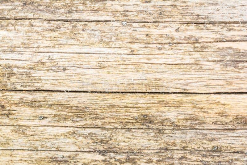 白杨树的日志大镇压损坏老自然木头的纹理,有一种不均匀的颜色 免版税库存图片
