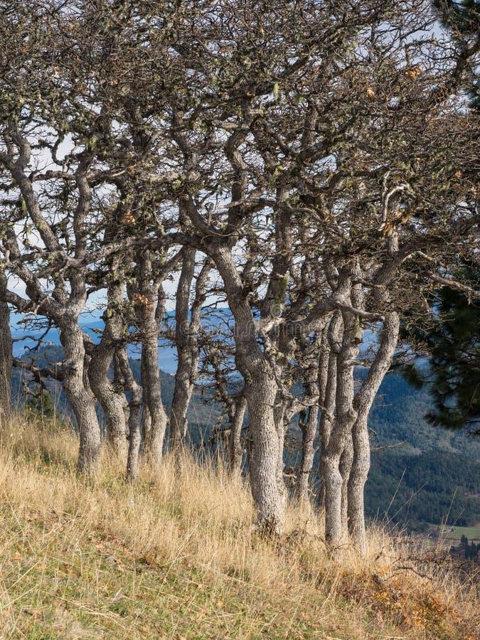 白栎木树在山的秋天支持 免版税图库摄影