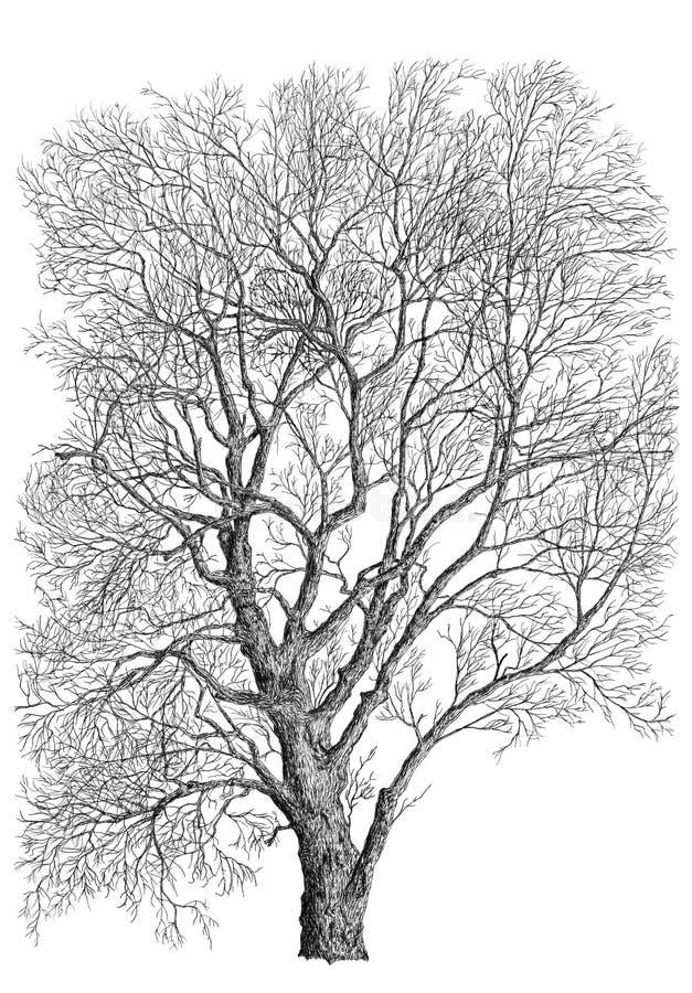 黑白树 库存例证