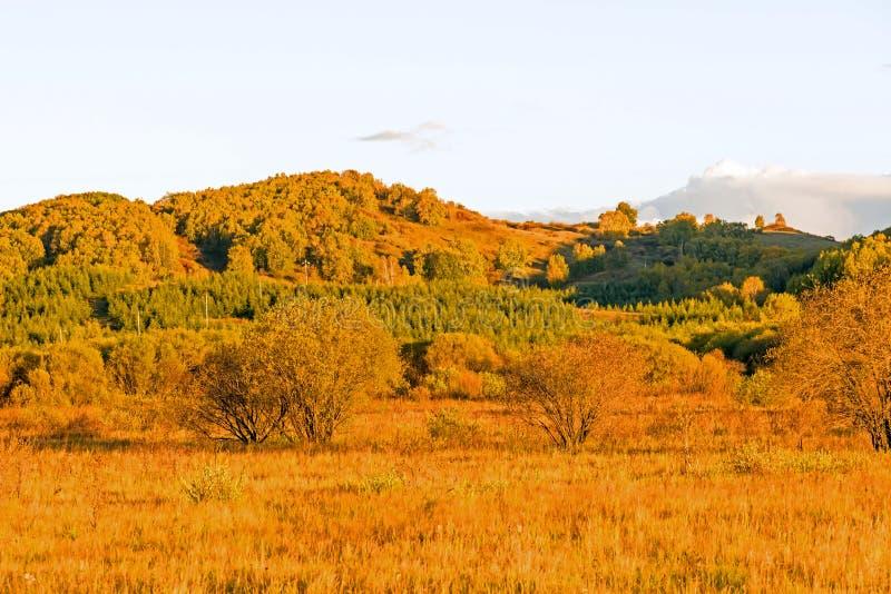 白桦和草原 库存照片