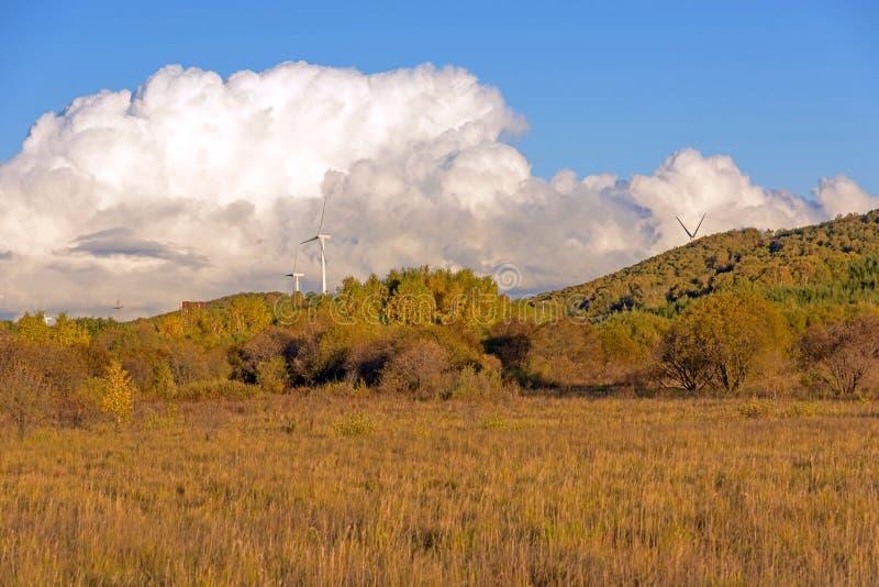 白桦和草原 免版税库存图片
