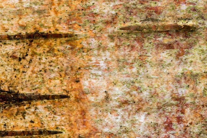 白桦树树皮 库存图片