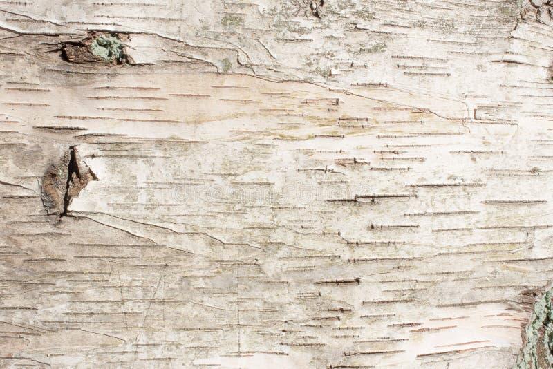 白桦树皮自然纹理背景 免版税库存照片