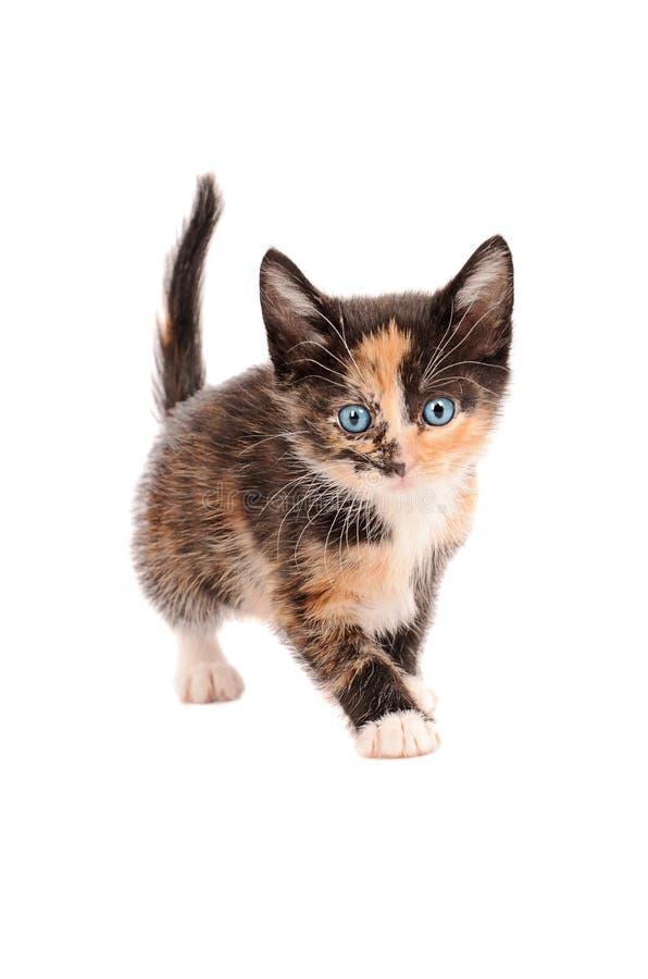 白棉布小猫身分 免版税图库摄影