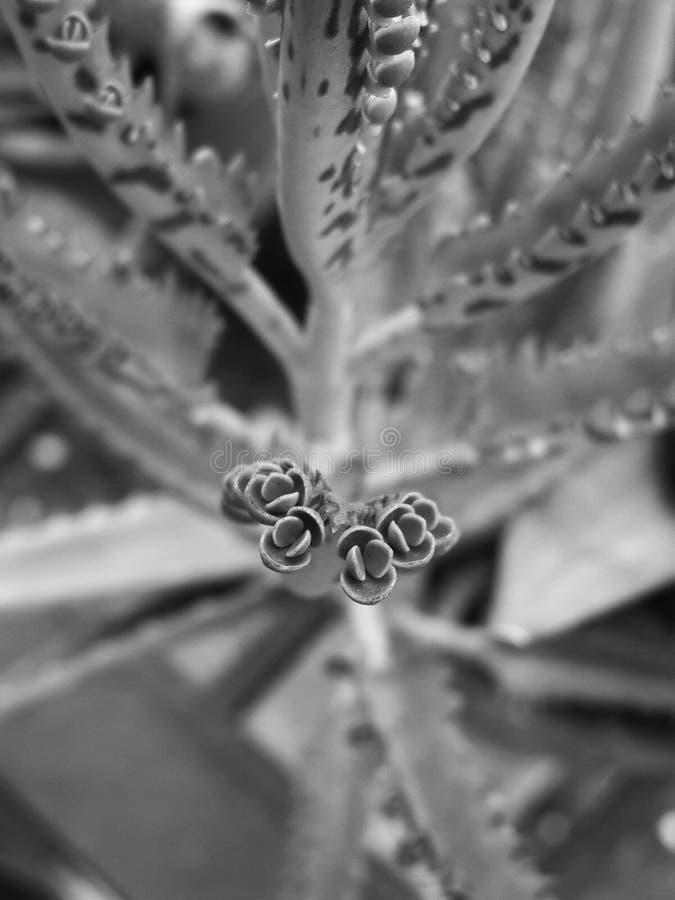 黑白植物 免版税库存照片
