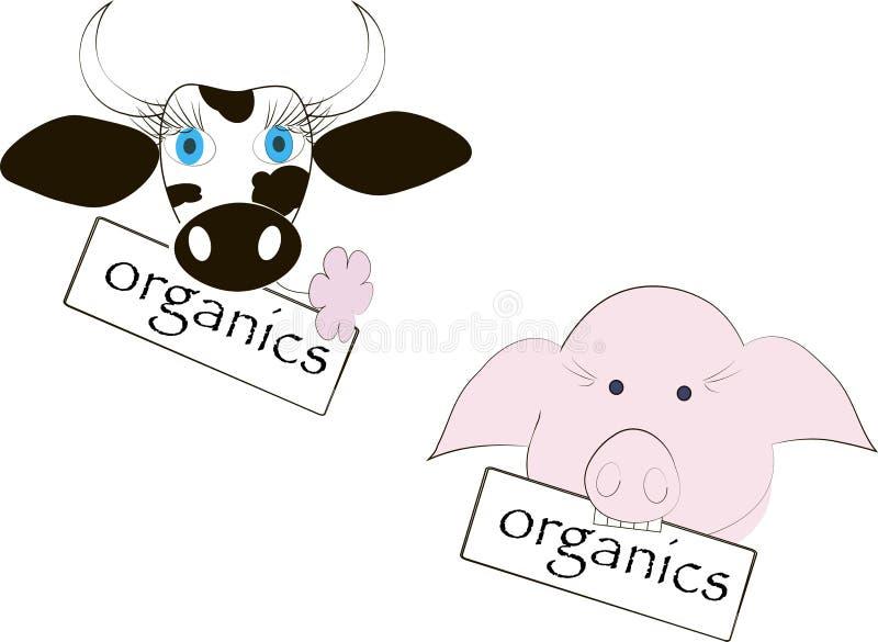 黑白母牛头,蓝眼睛,桃红色花,桃红色猪的头,有机物的题字 向量例证