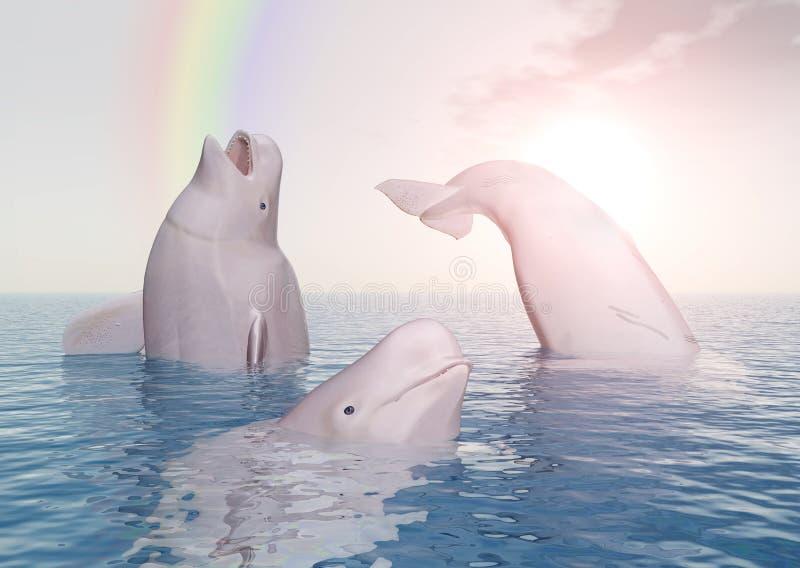 白海豚鲸鱼和彩虹 库存例证