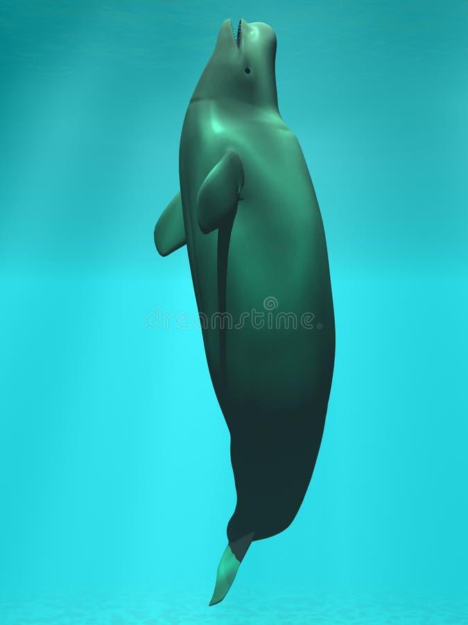 白海豚鲸鱼白色 皇族释放例证