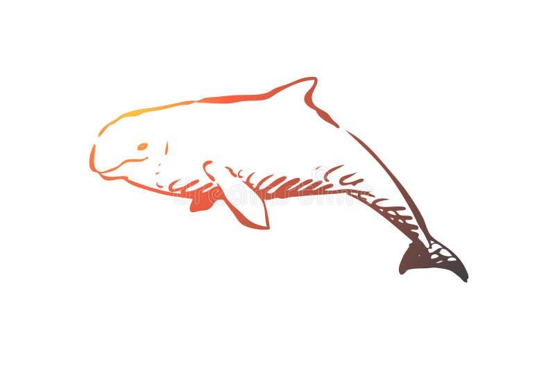 白海豚,海,水,野生生物,hausen概念 手拉的被隔绝的传染媒介 向量例证