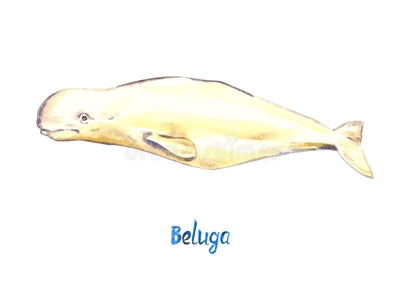 白海豚,隔绝在白色背景 向量例证