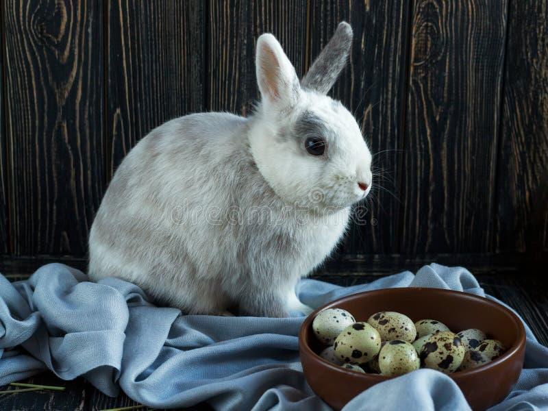 白灰色兔子在鹌鹑蛋附近坐黑暗的木背景 复活节天 库存照片