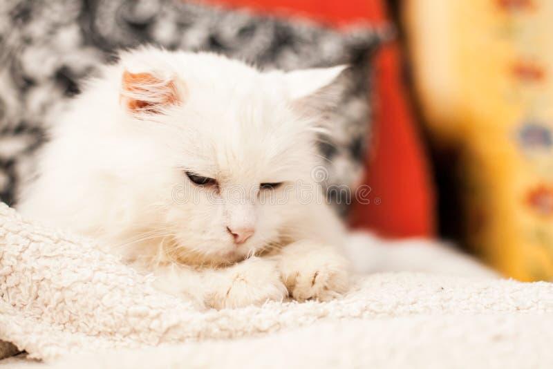 白猫 库存照片