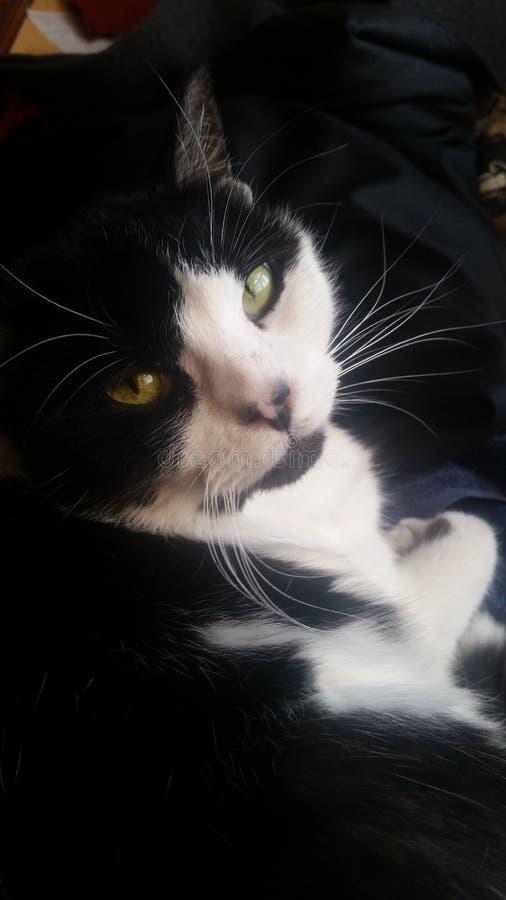黑白猫-香豌豆花 免版税库存图片