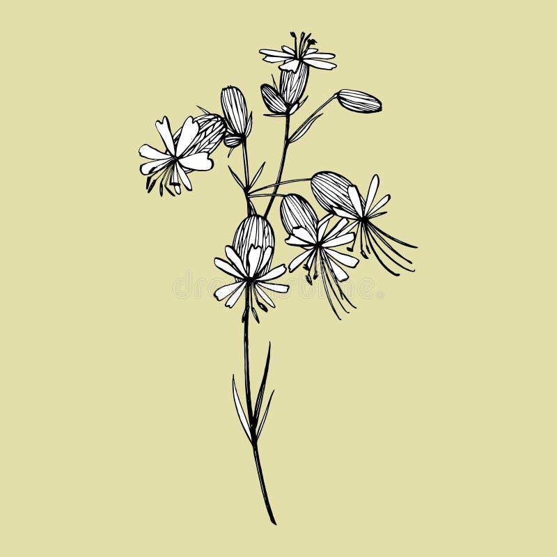 白玉草花 设置画的矢车菊,花卉元素,手拉的植物的例证 ?? 库存例证