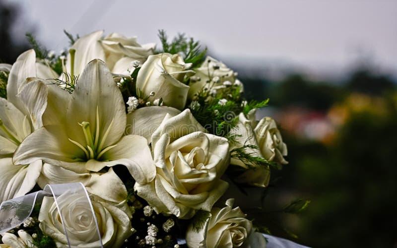 白玫瑰新娘花束  库存图片