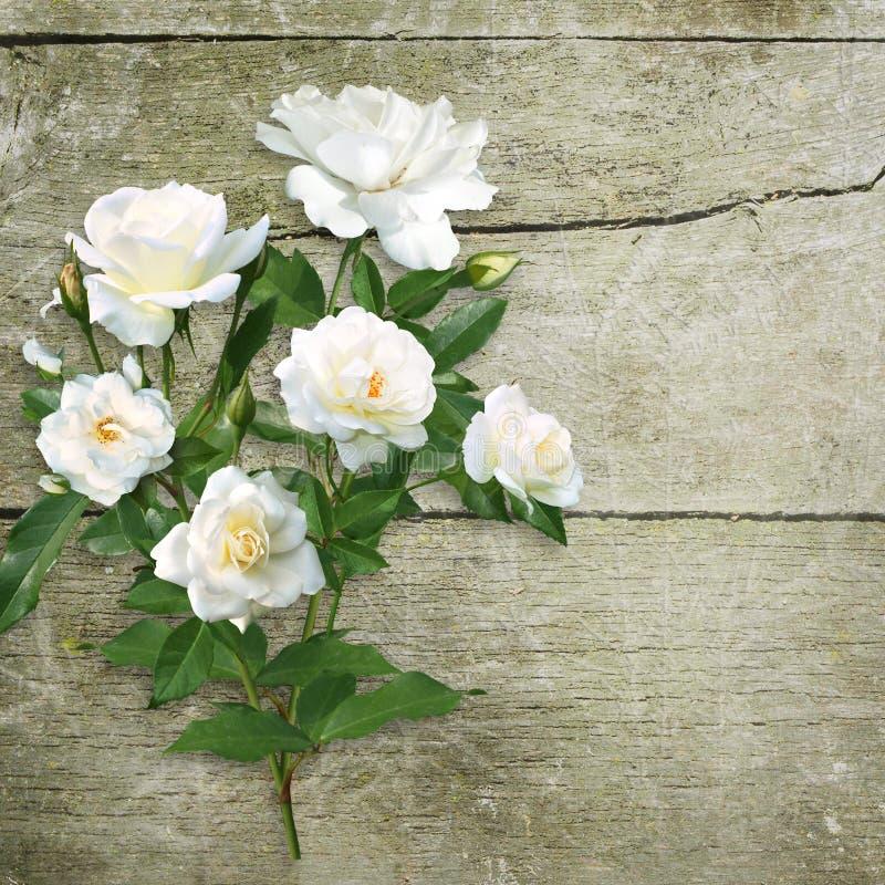 白玫瑰花束在老概略的木背景的 库存例证