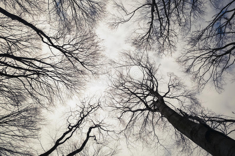 黑白的树 库存图片