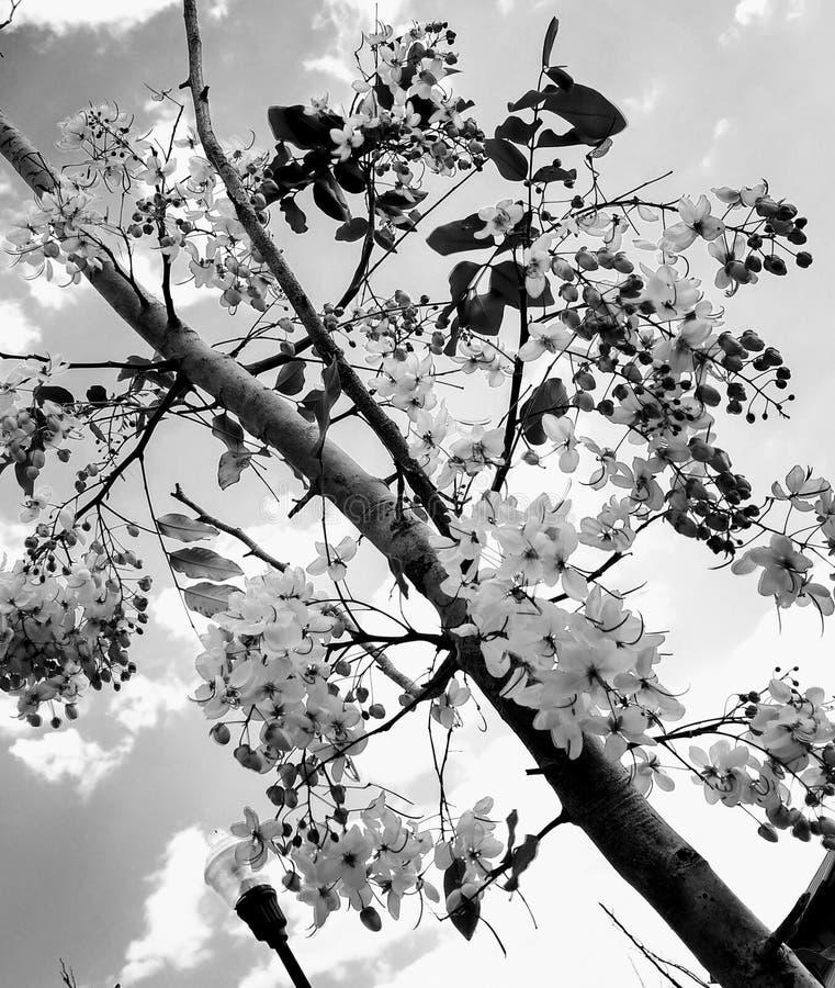 黑白的花 免版税图库摄影