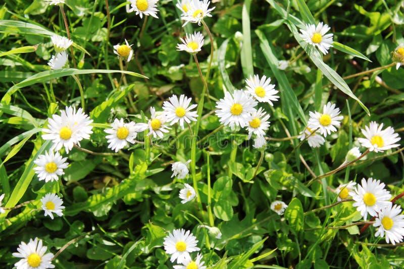 白的黄色小的花 免版税库存图片