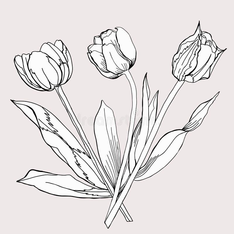 黑白的Tulip.Sketch花束。 库存例证