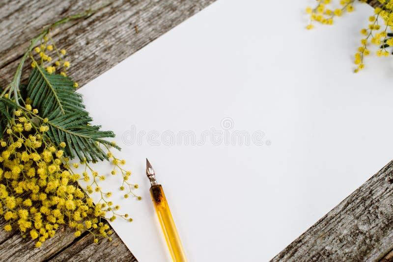 白皮书嘲笑与黄色开花含羞草和葡萄酒笔墨水在灰色木背景 库存照片