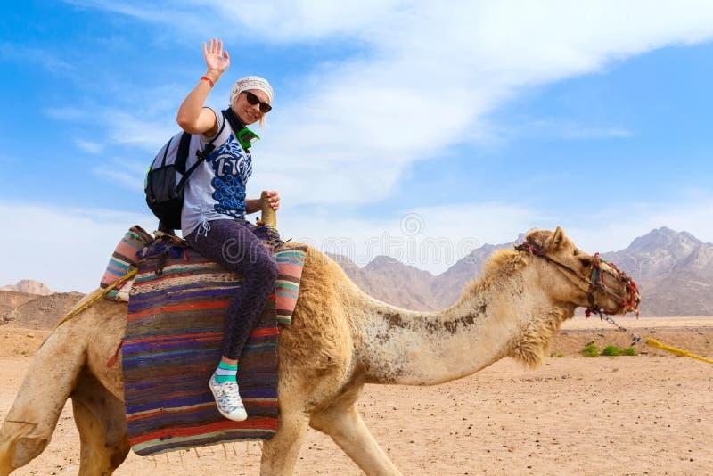 年轻白种人在骆驼的妇女旅游骑马 库存图片