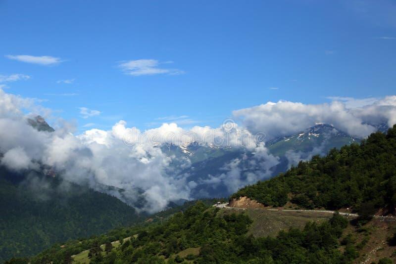 白种人山的积雪覆盖的峰顶的看法 免版税图库摄影