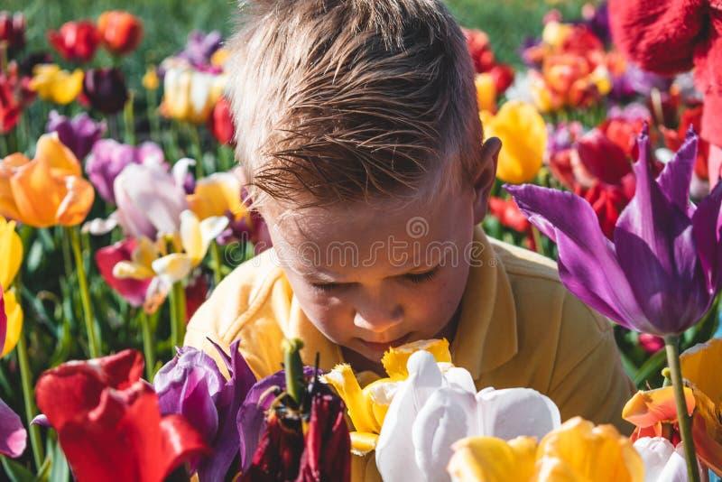 白种人男孩画象一个五颜六色的郁金香领域的在荷兰,荷兰 库存照片