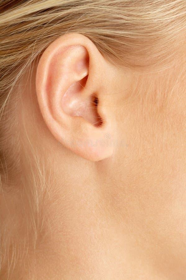 白肤金发的耳朵 库存图片