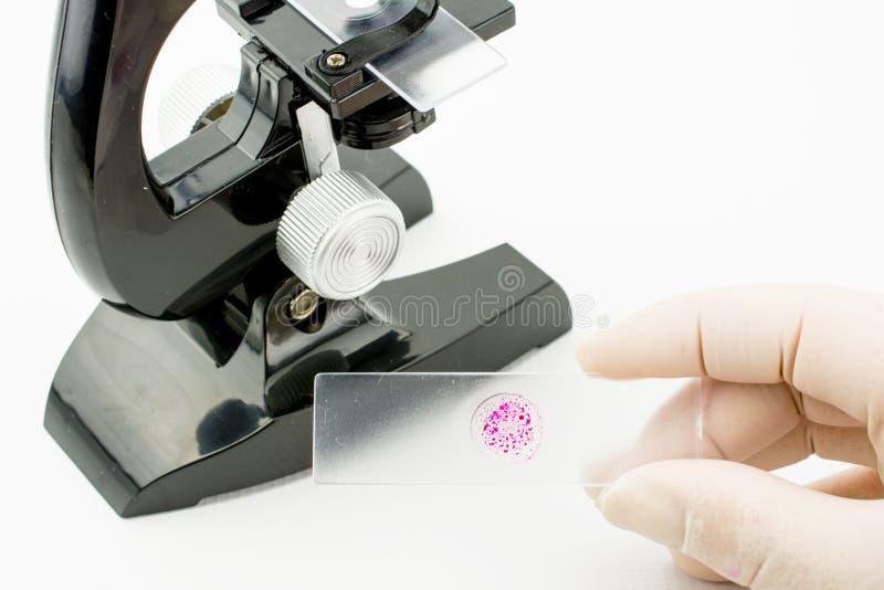 白背景显微镜与细菌病毒 免版税库存照片