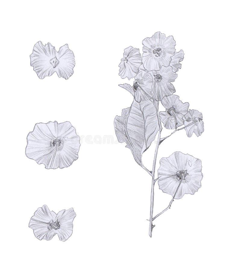 白色上隔离的野树花手绘铅笔图 图库摄影