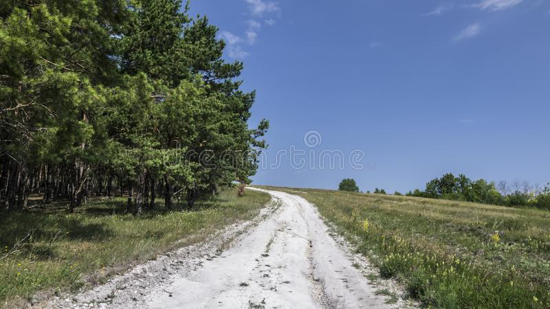 白色从白垩路连续通过小山与森林 库存图片