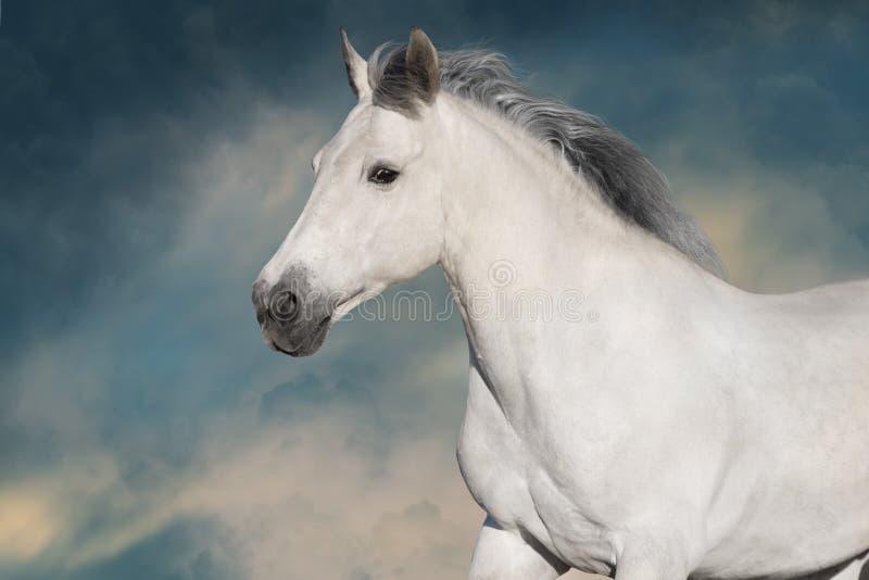 白色公马画象 库存照片