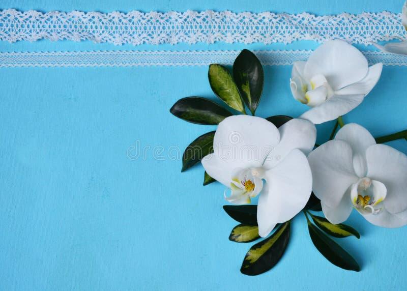 白色兰花和鞋带在蓝色背景 免版税库存图片