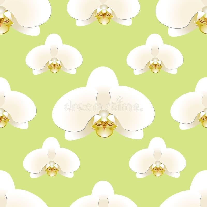 白色兰花在开心果色无缝的样式背景开花  向量例证