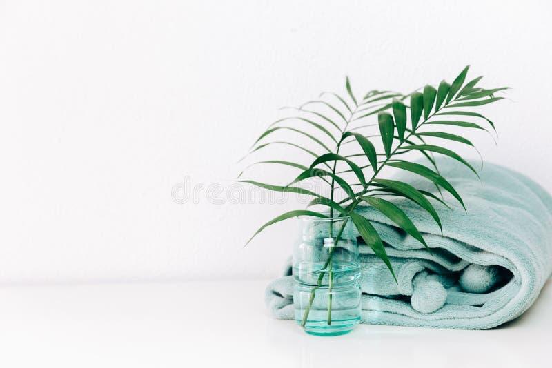 白色内部的现代植物 免版税库存图片