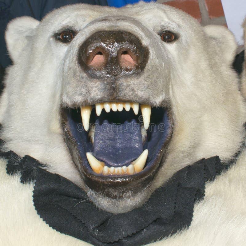 白色北极熊皮肤 库存图片