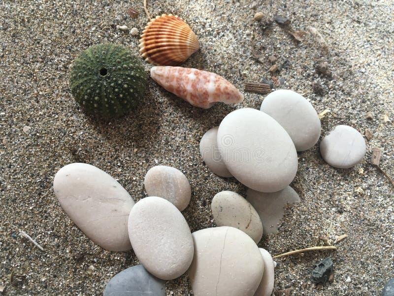 白色向海胆在沙子的adn壳扔石头 免版税图库摄影