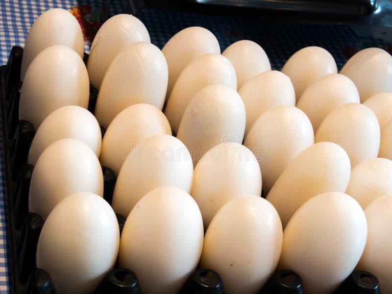 白色和干净的鳄鱼在黑色塑料盘区鸡蛋怂恿 库存照片