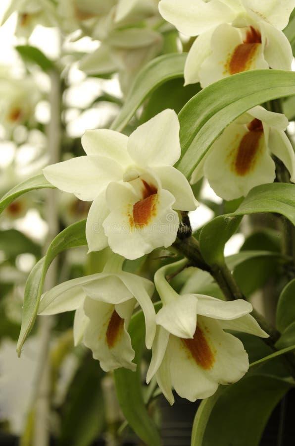 白色和橙色森林兰花 库存照片