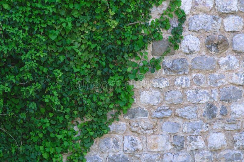 白色和灰色石头墙壁在绿色叶子的 免版税库存照片